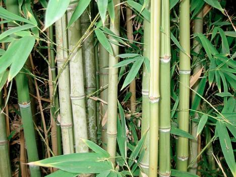 Miniseriál o materiálech: Bambus